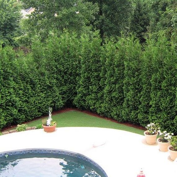 14-Privacy-Your-Yard