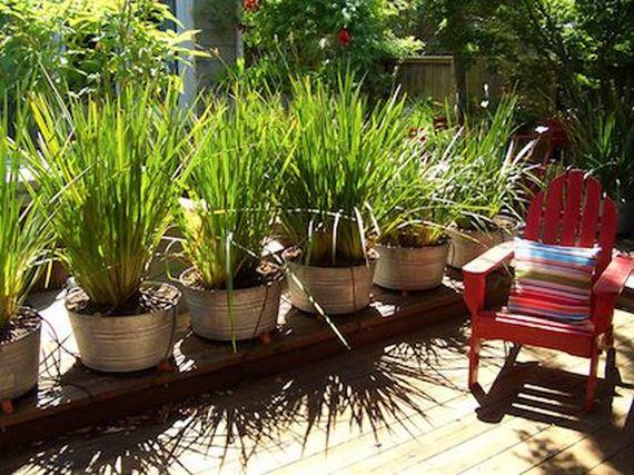 Amazing ways to create privacy in your yard diycraftsguru - Creating privacy in backyard ...