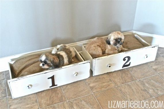 18-Beds - Pup