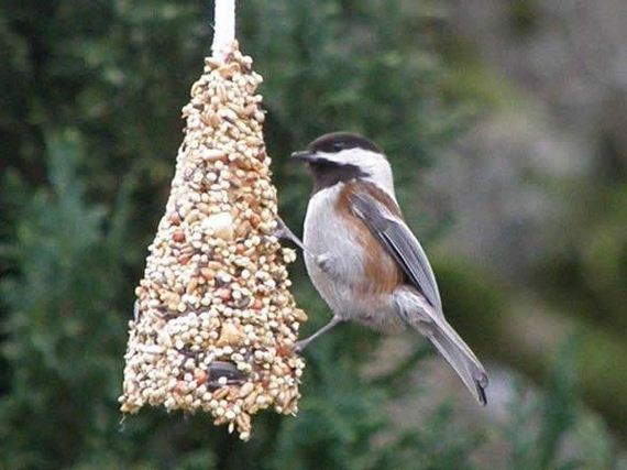 21-Homemade-Bird-Feeders