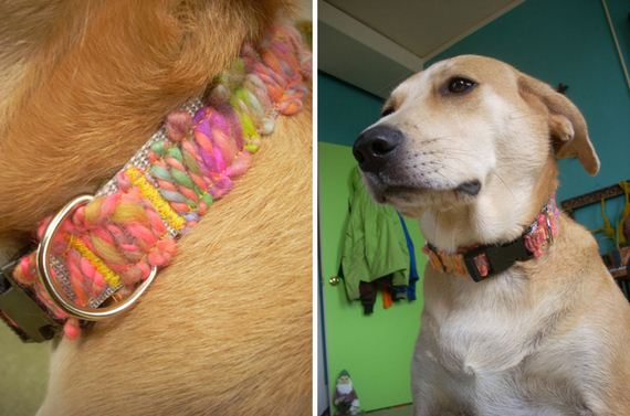 10-Doggy-Collars