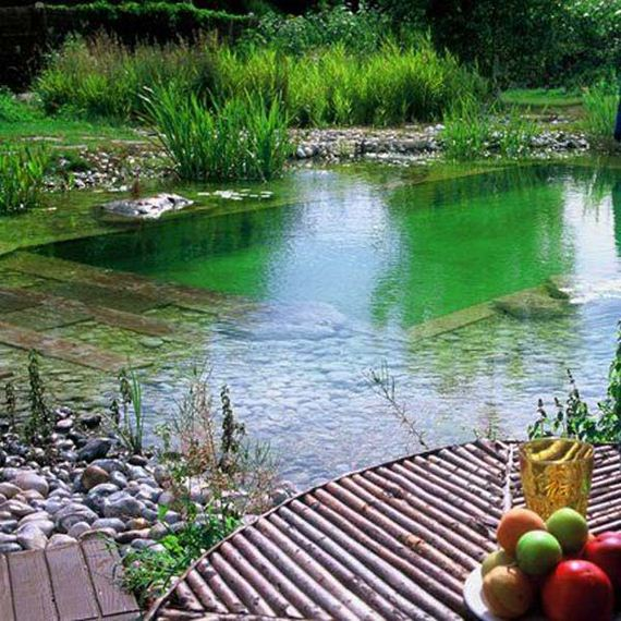 01-backyard-natural-swimming-pool