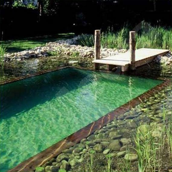 03-backyard-natural-swimming-pool
