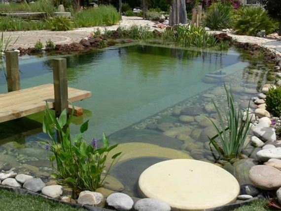 05-backyard-natural-swimming-pool