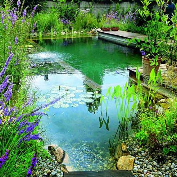 08-backyard-natural-swimming-pool