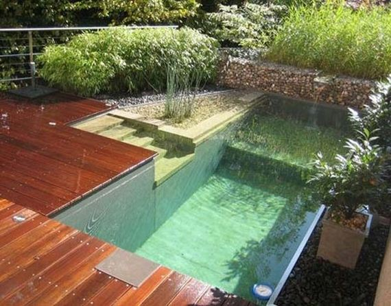 09-backyard-natural-swimming-pool