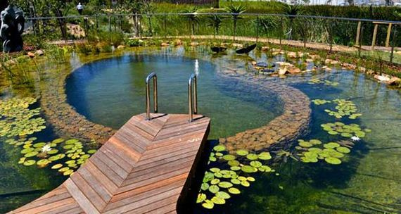 13-backyard-natural-swimming-pool