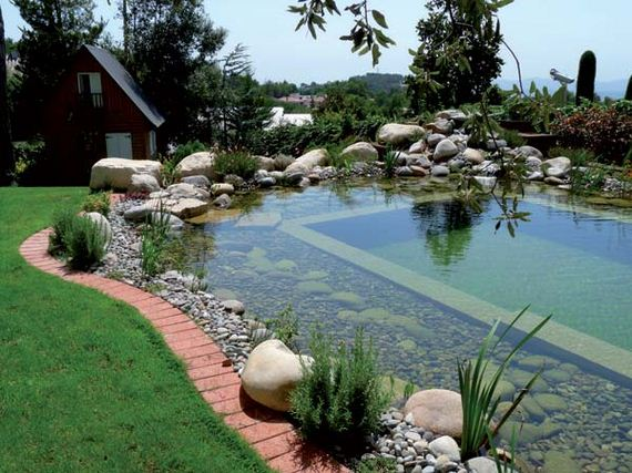 14-backyard-natural-swimming-pool