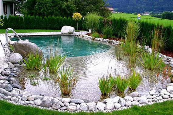17-backyard-natural-swimming-pool