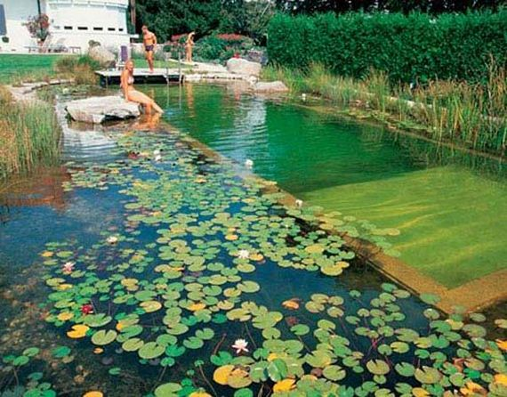 19-backyard-natural-swimming-pool