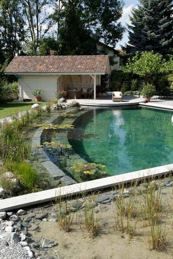 21-backyard-natural-swimming-pool