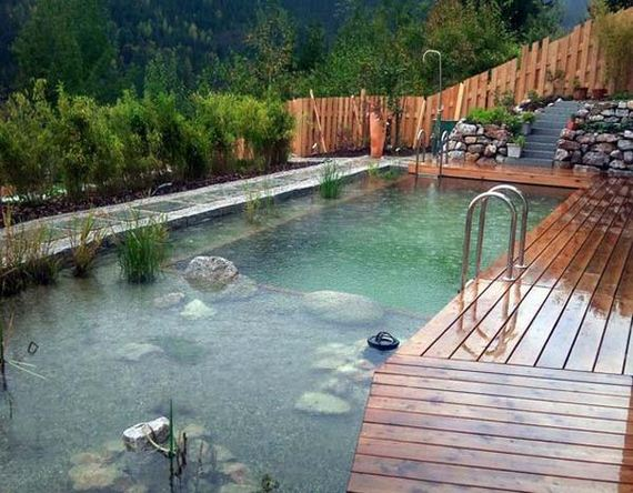 22-backyard-natural-swimming-pool