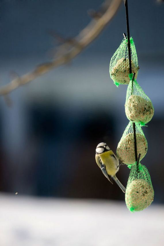 06-homemade-bird-feeders