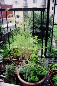 06-small-urban-garden-design-ideas