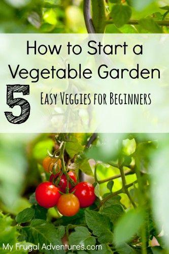 Easy Veggies For Beginners Diycraftsguru