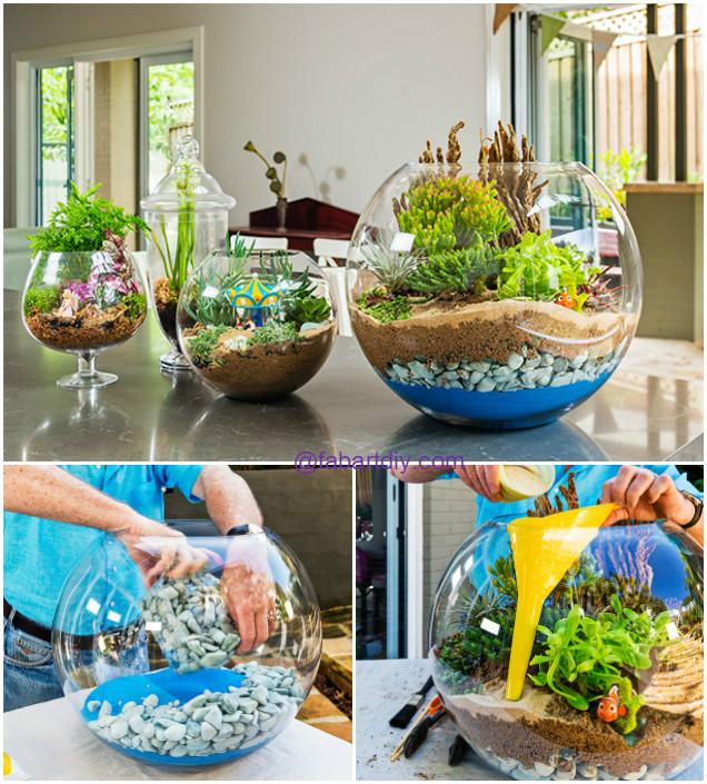 How to Make a Cheap Terrarium